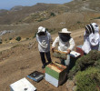 Beekeeping with Thalori