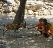 Cretan Ibex (wildgoat)