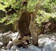 In Samaria gorge