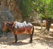 The transportation means in Samaria gorge