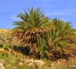 Palm at Almiros