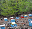 Beehives at Selakano by Aria Hatzivasili
