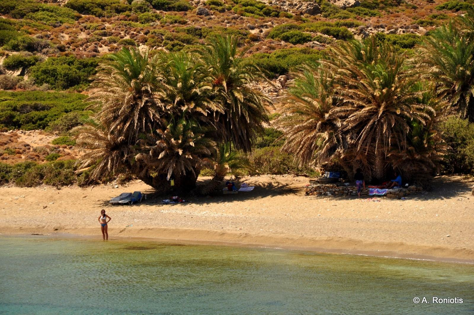 beaches with palm trees travel guide for island crete greece