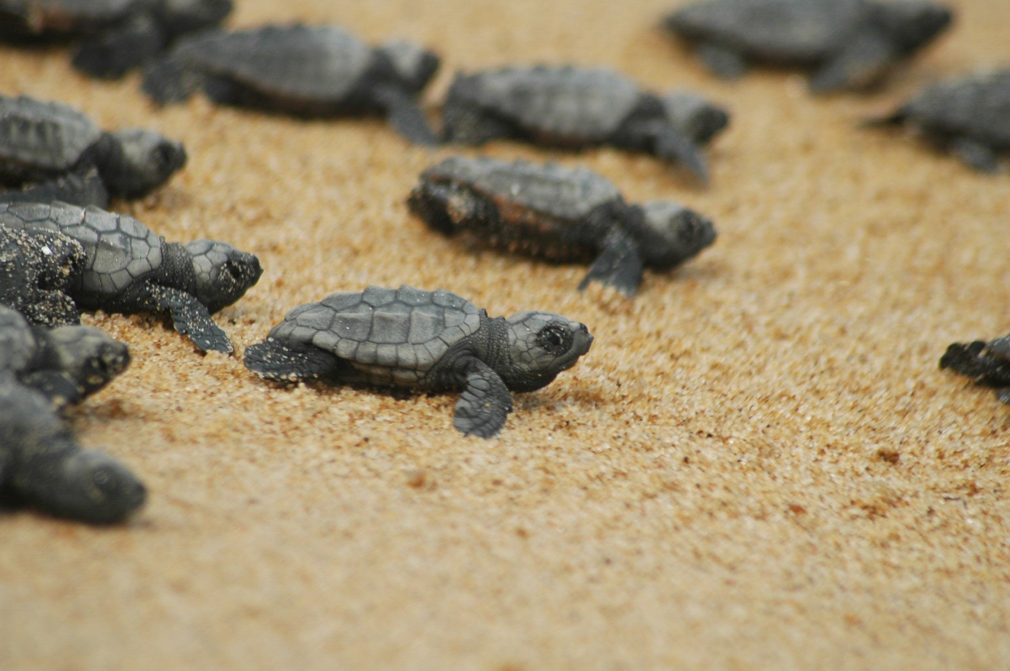 Loggerhead sea turtle - Travel Guide for Island Crete, Greece