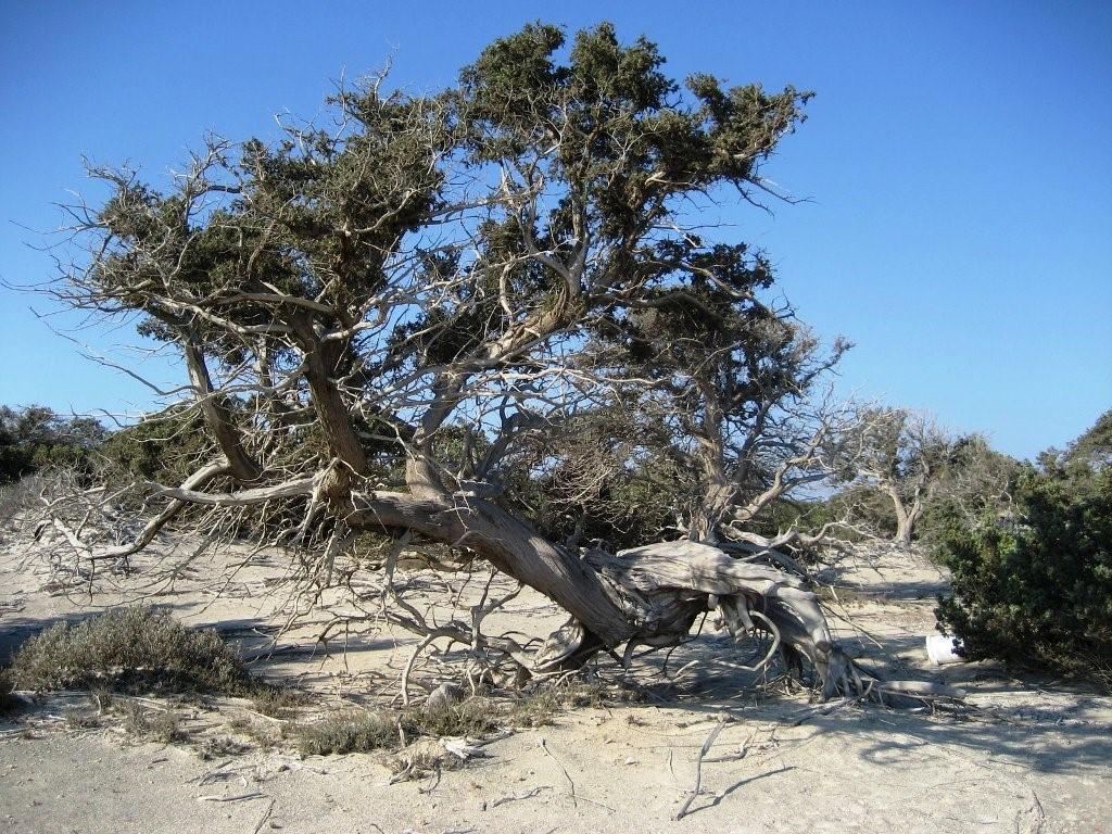 Junipers travel guide for island crete greece for The juniper