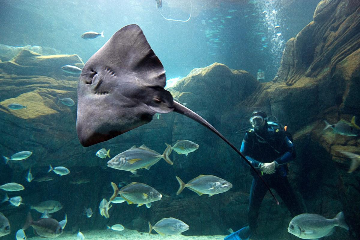 Cretaquarium - Thalassocosmos - Travel Guide for Island ...